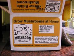 mushrooms_1_box.jpg